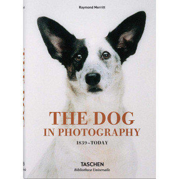 DOG IN PHOTOGRAPHY