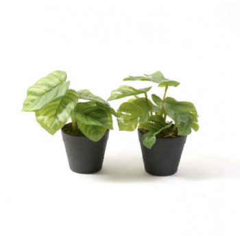 Dekorativno cveće GREEN PLANT IN POT ASSORTED 16CM
