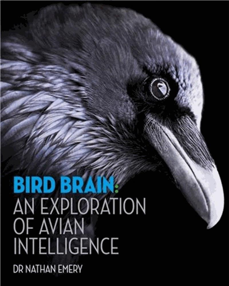 BIRD BRAIN An exploration of avian intelligence