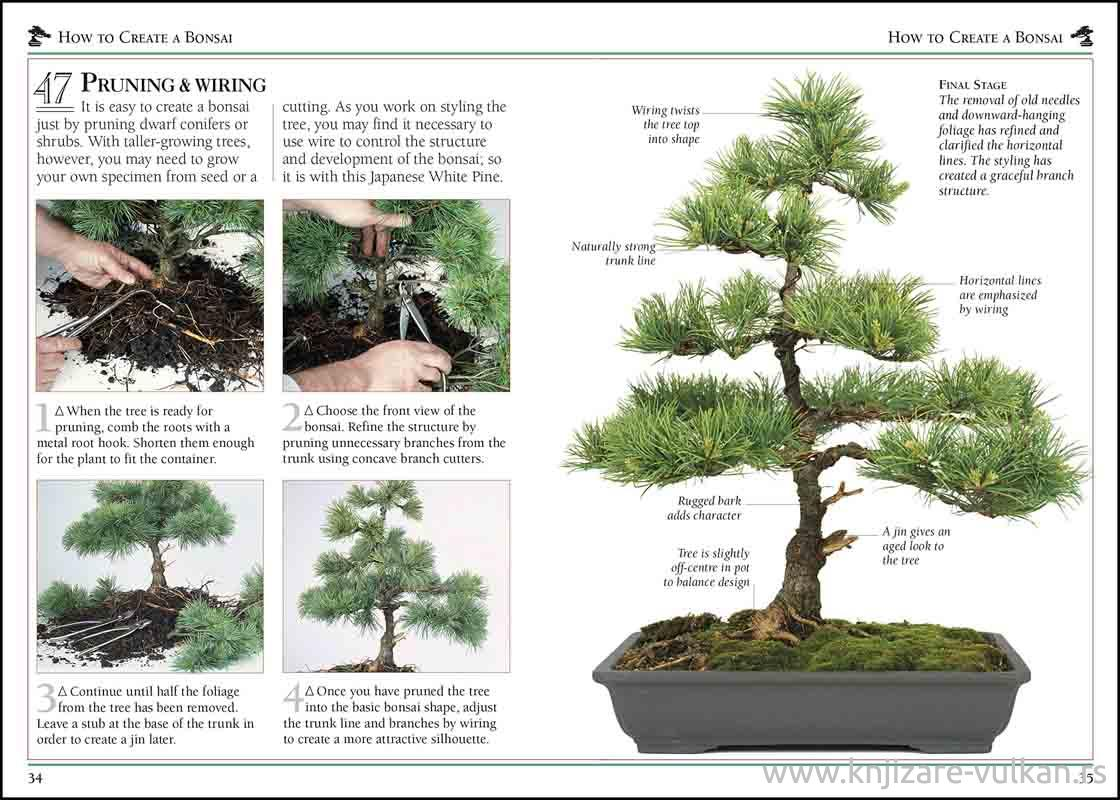 101 ESSENTIAL TIPS BONSAI