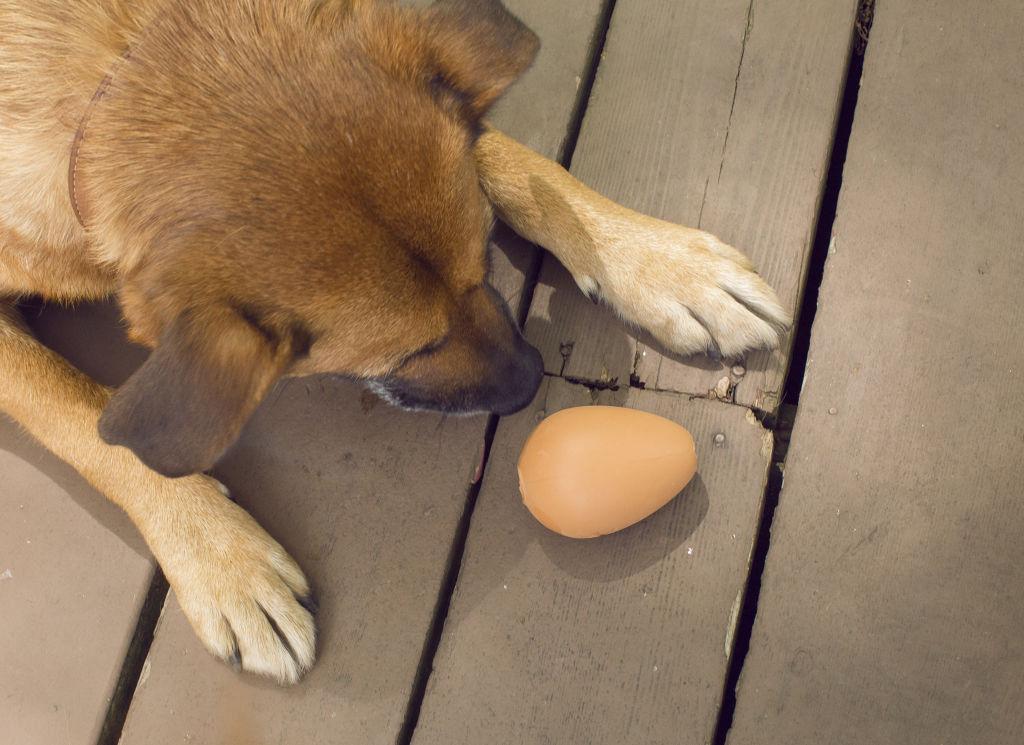 Igračka za pse BOUNCY EGG TREAT BALL