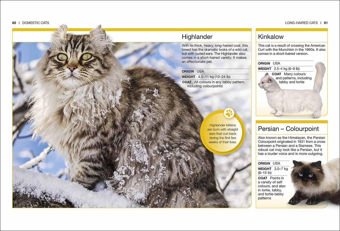 POCKET EYEWITNESS CATS