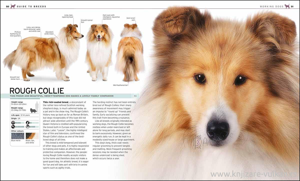 THE COMPLETE DOG BREED